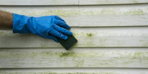 What to Know About Mold on Vinyl Siding, Anchorage, Alaska