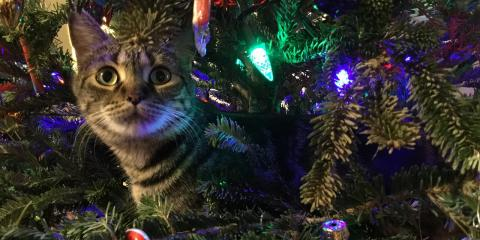 Happy, Healthy Holiday Tips From Anderson Township's Best Pet Center, Anderson, Ohio