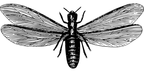 3 Signs of Drywood Termites From Hawaii's Pest Control Experts, Pahoa-Kalapana, Hawaii