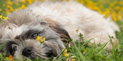 3 Ways Grooming Keeps Dogs Healthy in Warm Weather, Fairfield, Ohio