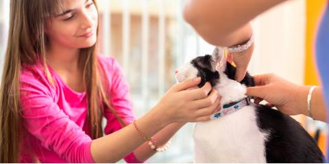 How to Tell Whether Your Pet Has Allergies, Fairfield, Ohio