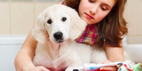 Celebrate Pet Dental Health Month With Wailuku's Top Animal Care Center, Wailuku, Hawaii