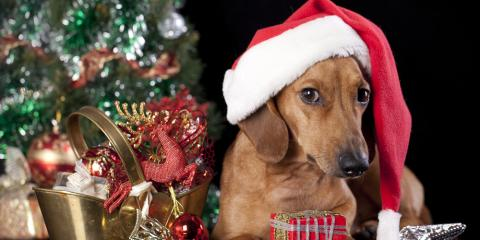 Wailuku's Top Animal Care Center Shares 3 Tips to Keep Your Pets Safe This Holiday Season, Wailuku, Hawaii