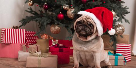 How to Pet-Proof Your Home for the Holidays, Springfield, Ohio