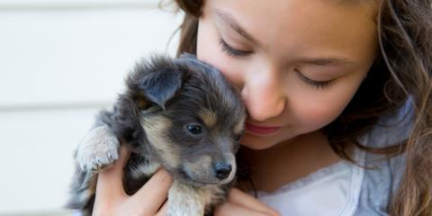 5 Animal Care Tips for Housetraining Your New Puppy, Montgomery, Ohio