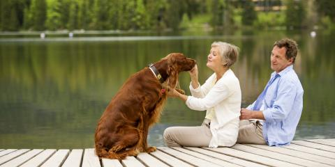 A Dog Owner's Guide to Blastomycosis, Round Lake, Wisconsin