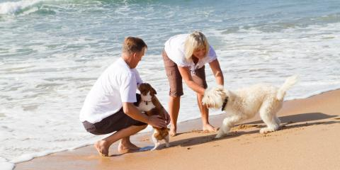 3 Animal Care Tips for Taking Your Dog to the Beach, Ewa, Hawaii