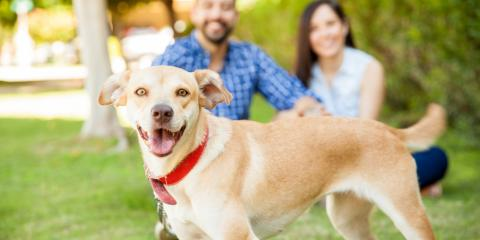 5 Important Animal Care Facts About Microchipping Your Dog, Ewa, Hawaii