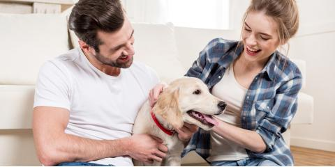 Animal Clinic's Guide to Selecting the Right Dog for Your Home, Covington, Kentucky