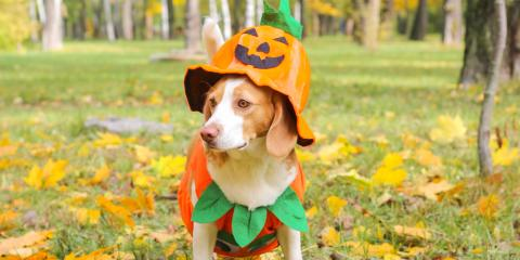 3 Types of Halloween Candy to Keep Away From Pets, Foley, Alabama