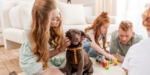 A Guide to Vaccinations for First-Time Puppy Owners, Elkton, Maryland