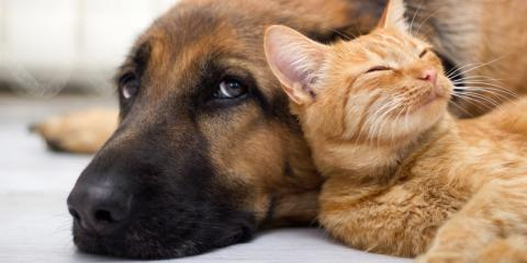 Important Pet Vaccines for Your Dog or Cat , Honolulu, Hawaii
