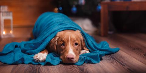 4 Ways to Keep Your Pet Safe on New Year's Eve, Honolulu, Hawaii