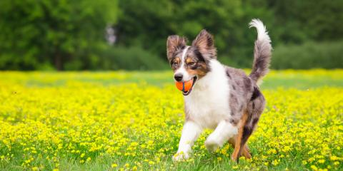5 Ways to Play Safe With Your Dog , Elk Grove, California