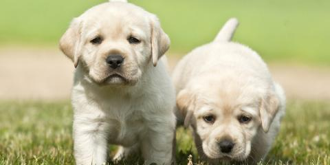 3 Tips Animal Clinics Recommend You Follow When Bringing Home a New Puppy, Gulf Shores, Alabama