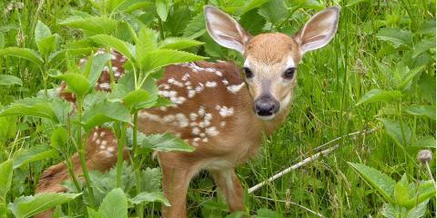 What to Do If You Find an Orphaned Baby Animal, New Milford, Connecticut