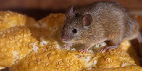 Animal Control 101: 3 Signs You Have a Mouse Problem, New Milford, Connecticut
