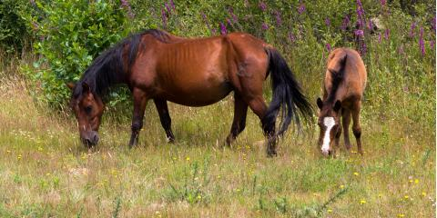 3 Types of Horse Feed & Their Uses, Dove Creek, Colorado