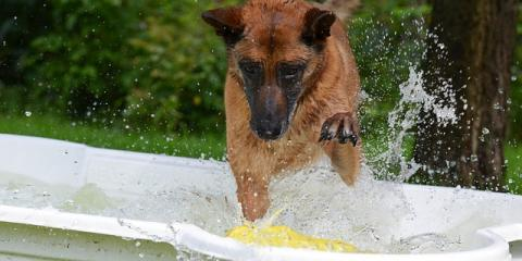 5 Easy Ways to Protect Your Dog From Heat Stroke, Enterprise, Alabama