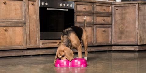 Animal Hospital Shares 3 Reasons Your Pet Is Vomiting After Eating, Enterprise, Alabama