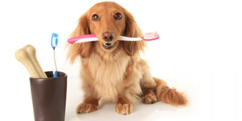 Discover the Importance of Pet Dental Care From Elk Grove's Top Animal Hospital, Elk Grove, California