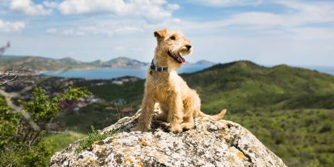 Maui Animal Hospital Shares 5 Tips on How to Hike With Your Dog, Maui County, Hawaii