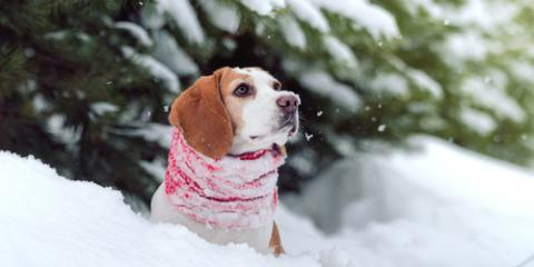 An Animal Hospital's Top 3 Tips to Protect Your Pet During the Winter, Middlefield, Ohio