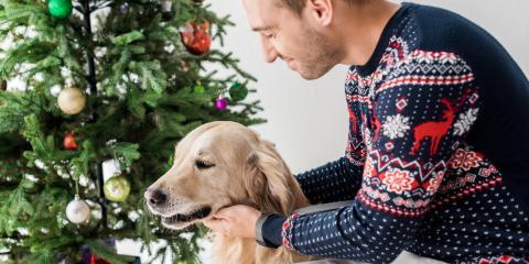 5 Festive Foods That Can Harm Your Dog, Rosenberg-Richmond, Texas