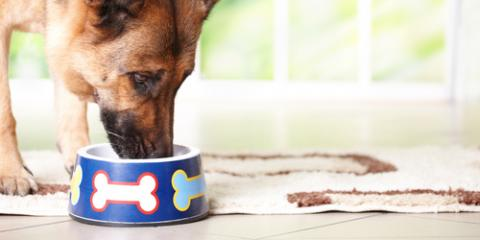 Animal Hospital Sheds Light on Your Pet's Strange Eating Habits, Penfield, New York