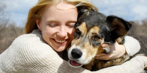 What Heartworms Are & How to Prevent Them With Your Animal Hospital, Waynesboro, Virginia