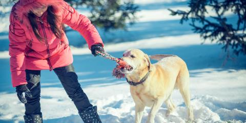 3 Ways to Protect Dog Paws in the Winter, Columbia, Missouri