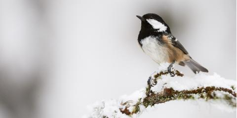 How Do Winter Storms Affect Connecticut's Wildlife? , New Milford, Connecticut