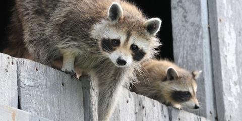 Madison's Animal Removal Experts Share 3 Key Tips to Avoiding Pests This Spring, Fitchburg, Wisconsin