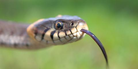 5 Signs There's a Snake in Your Home, New Milford, Connecticut