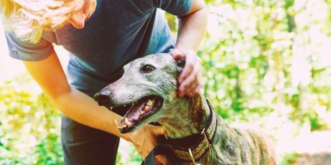How Pet Skin Problems Indicates Bigger Health Issues , Sharonville, Ohio