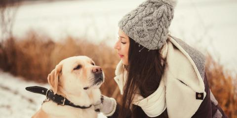 3 Animal Skin Care Tips for the Winter Months, Sharonville, Ohio