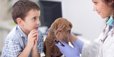 5 Animal Vaccines Your Puppy Needs in Their First Year of Life, ,