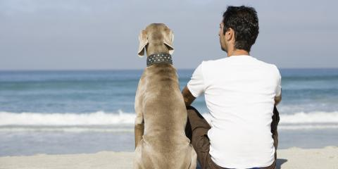 5 Resolutions for Your Pets This New Year , Ewa, Hawaii