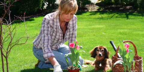 5 Veterinarian Tips to Safeguard Animal Wellness, Ewa, Hawaii
