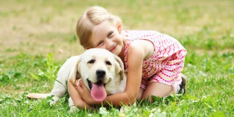 3 Reasons Your Pet Needs an Annual Checkup From an Animal Care Center, Maui County, Hawaii