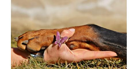 Cincinnati's Top Pet Resort Explains the Benefits of Having a Dog, Springfield, Ohio