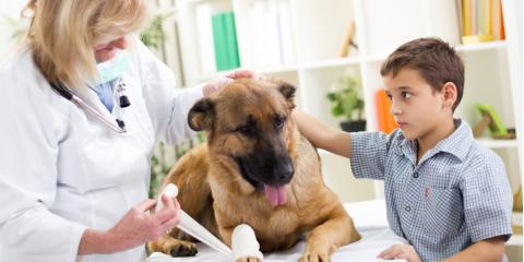 What Are the Signs That Your Pet Needs to See an Emergency Vet?, Elk Grove, California