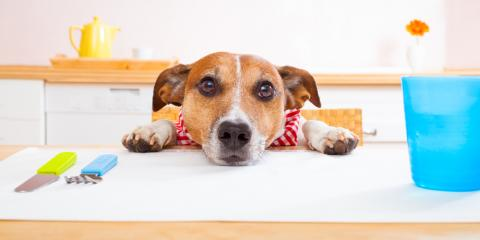 Why Shouldn't You Feed Your Pet Table Scraps? Foley's Top Veterinarians Explain, Foley, Alabama