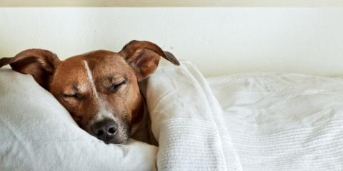 Statesboro's Leading Animal Hospital Offers the Flu Vaccine for Dogs, Statesboro, Georgia