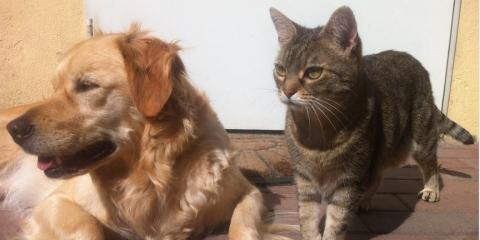 Reasons to Take Your Pet to a Well-Rounded Animal Clinic, Foley, Alabama