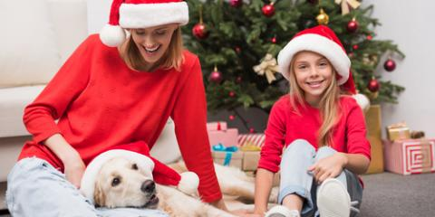 3 Holiday Foods That Are a Danger to Animal Wellness, Ewa, Hawaii