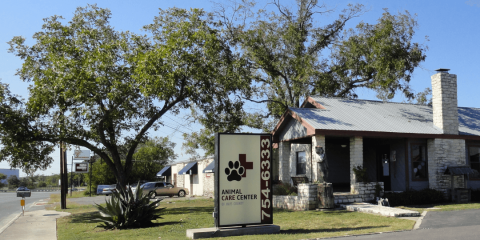 3 Things to Look for in a Quality Animal Hospital, San Marcos, Texas