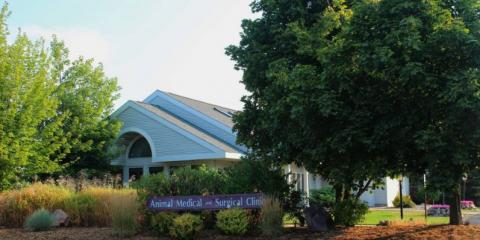 Animal Medical And Surgical Clinic, Veterinarians, Health and Beauty, Wisconsin Rapids, Wisconsin