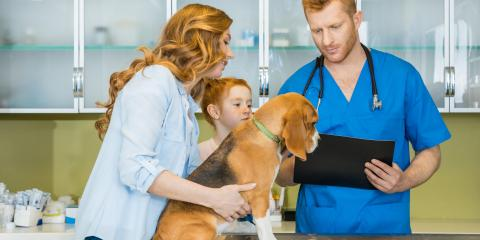 A Guide to Finding the Best Animal Clinic for Your Pet , Foley, Alabama