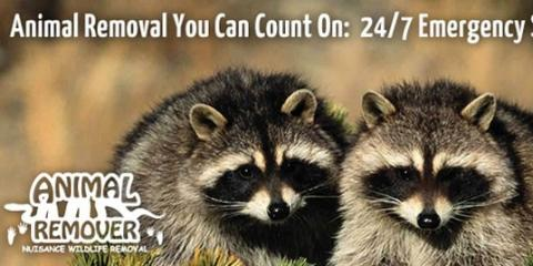 Animal Remover, LLC Knows How to Keep Raccoons Out of Your Attic, Anderson, Ohio